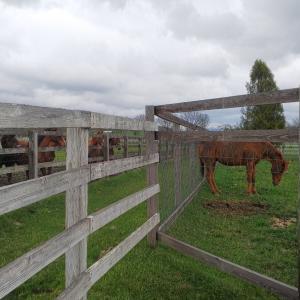 【競馬】[画像] グラスワンダー(24)が1歳馬達に人気だと話題に