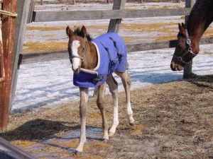 【競馬】[画像] 問題、この馬は誰でしょう