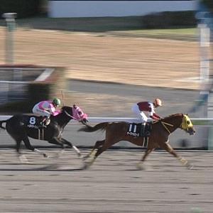 【競馬】今年のジャパンダートダービー勝ち馬を教えてください