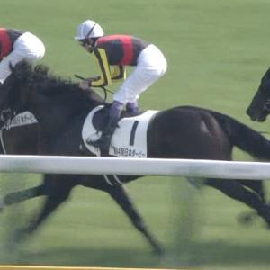 【競馬】弱いけど好きな馬