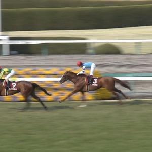 【競馬】[動画] メジロドーベルさん(25歳)が当歳馬に混じって元気に走り回っててワロタw