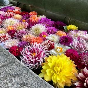奈良県 岡寺 ◉日本最初のやくよけ霊場 ◉
