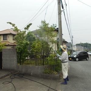 小郡市、久留米市、筑紫野市、鳥栖市、基山町、筑前町、大刀洗町で毛虫・庭木の害虫の駆除・消毒をしています