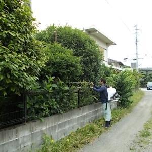 小郡市、筑紫野市、鳥栖市、筑前町、大刀洗町でイラガ・毛虫の消毒をしています。