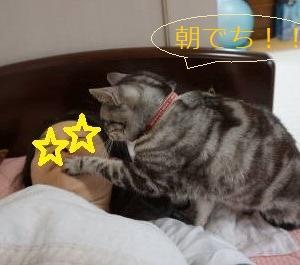 起こす猫。
