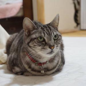 猫の受信力。