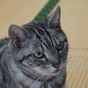 猫に座布団。
