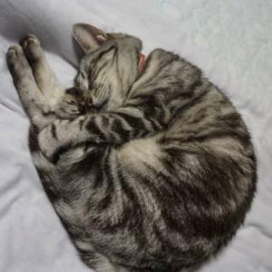 伸身抱え込み寝。