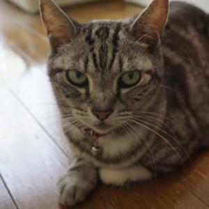 猫への暑中見舞い。