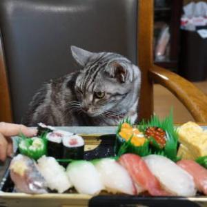 「猫はきれい好き」はホントかウソか。