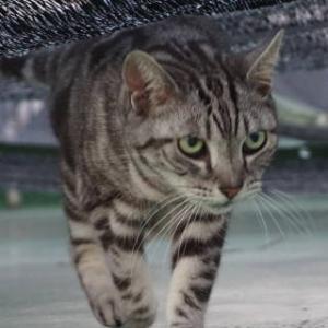 とよを渡る猫。