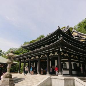 長谷寺の紫陽花☆鎌倉
