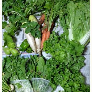 採りたて野菜«٩(*´∀`*)۶»