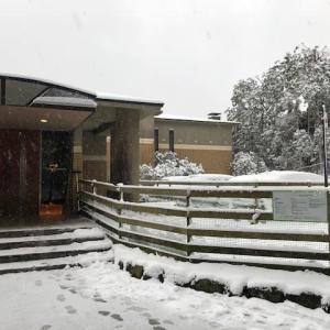 箱根は雪が降っています。