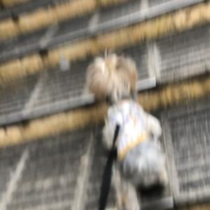 シロツメクサの中ロングリードで遊ぶ
