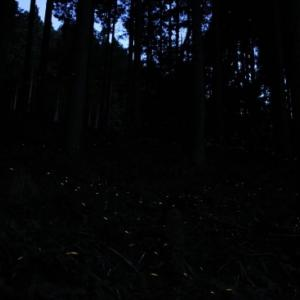 再掲載【ホタル撮影修行2012】 2012年ホタル前線・西粟倉村に向けて北上中③ 「ヒメボタル編」