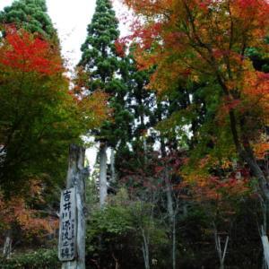再掲載【2011年紅葉もうすぐピーク♪】2011年紅葉前線予想Ⅶ  『2011年10月27日若杉天然林』