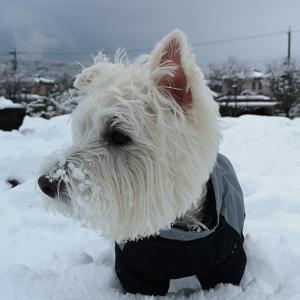 天気予報通り 雪