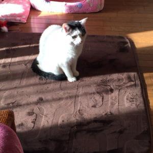 白い方猫と黒い方の猫