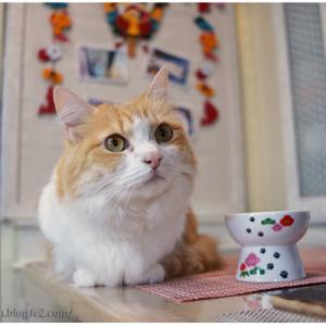 ニャンズもテーブルでおやつタイム&鏡開きのお汁粉♪