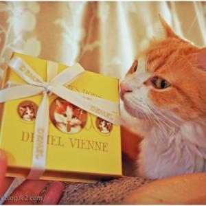 バレンタイン飾りと今年のチョコレート♪