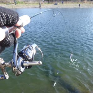 「北方ます釣り場」リベンジ平日釣行 その2