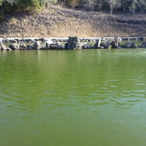「戸神の池」超久しぶり釣行 その2