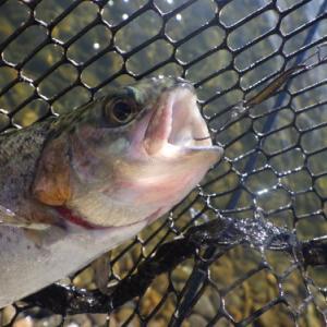 放流なしの「北方ます釣り場」釣行 最終話
