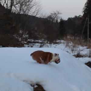 残り雪~~♪