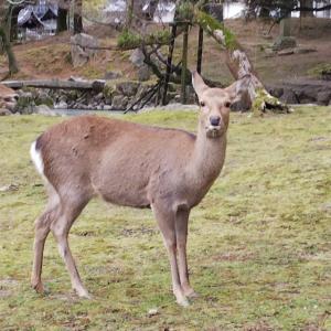 【奈良旅行】鹿さんに会いに…♡