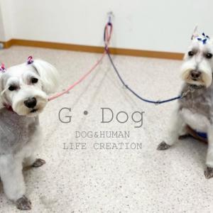 半年ぶりの G・Dogさん