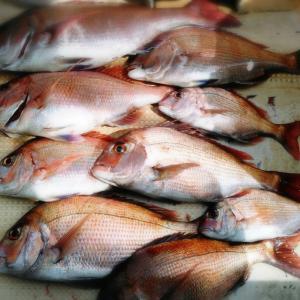 沖釣りの楽しみは釣果だけでない!