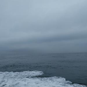 明石のアオリイカ釣りは微妙な結果になりました!