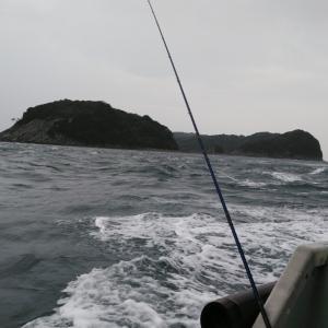 またまた加太の鯵釣り‼️