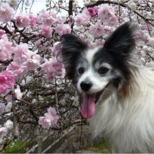 お医者の後のお花見散歩