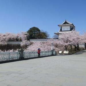 ◇金沢城公園の桜2020-2 石川門、三の丸広場