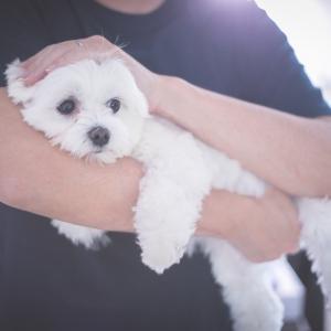 今日の写真「抱っこの仕方」-犬写真