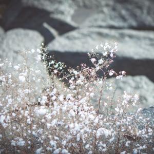 「雪の花」-風景