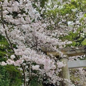 来週8日から福岡岩田屋です。
