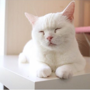 猫カフェスタッフ 里親募集(ビアン・ユミコ・ユイ)