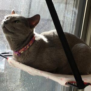 日本初! 住宅展示場で出張猫カフェ