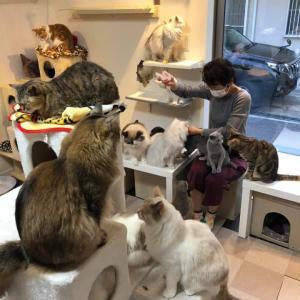 いよいよ、出張猫カフェ みのお 山口 開催致します。
