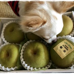 梨をいただきました