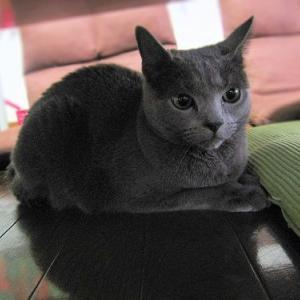 ついに、猫も新型コロナ感染?
