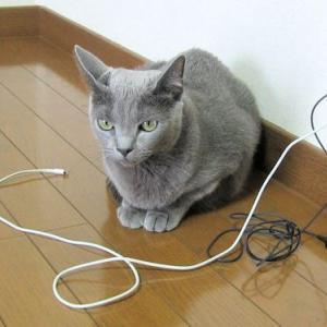 猫ホイホイ(猫転送装置)に入っちゃったの? く~ちゃん