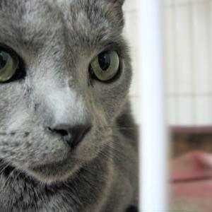 ネコ発作と言っていたのは、猫の病気「知覚過敏症」だった?