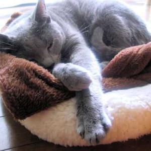 お外は寒いけれど、お家の中は暖かい・・・く~ちゃん日向ぼっこでお昼寝