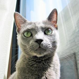 猫の目って不思議! く~ちゃんを見てつくづく思う~