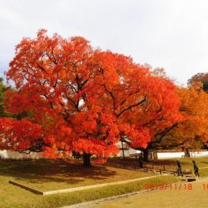 旧閑谷学校の楷の紅葉(2019/11/18)