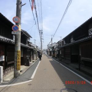津山 千光寺のシダレザクラ 本日の様子 (2020/03/26)